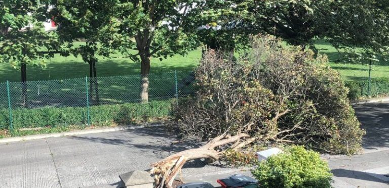 Guide to Roof Damage Caused by Fallen Trees